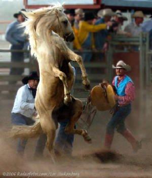 Wild horse race.