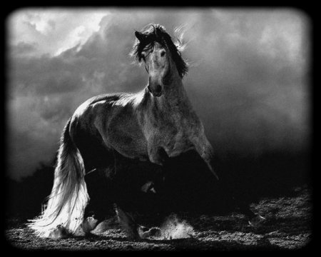 La prière du cheval.