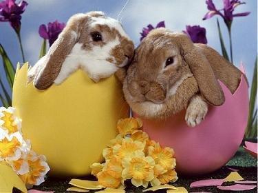 Bonne fête de Pâque.