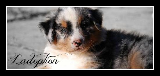 Êtes-vous prêt à l'adoption