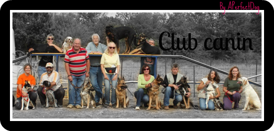 Les clubs canins