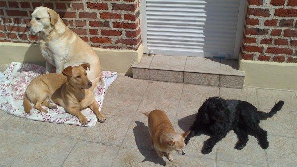 Nos 4 loulous : Balou, Holly, Ryana et Eclipse.