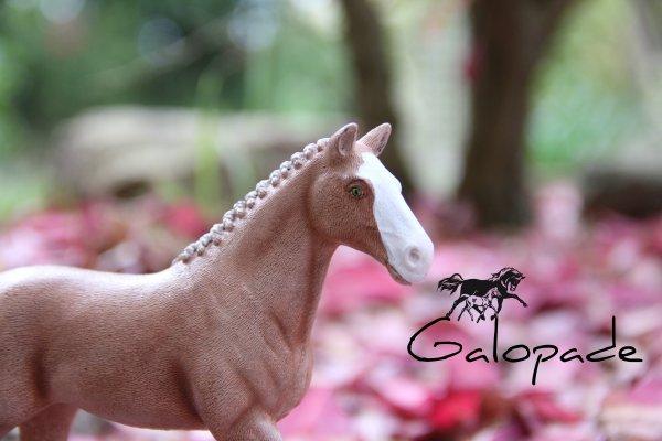 Bienvenue sur Galopade ~