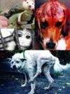 L'expérimentation animale, du nouveau ?