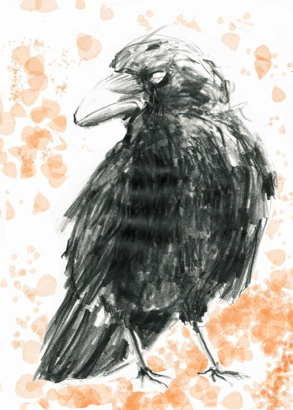 dessin d'observation : corbeau