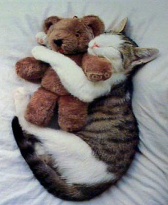 Aujourd'hui, c'est la journée du chat!  Bonne journée.