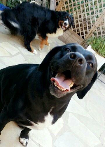 26 août , journée mondiale du chien