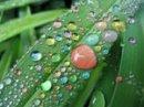 Photo de Sweet-Potat0ee--x3