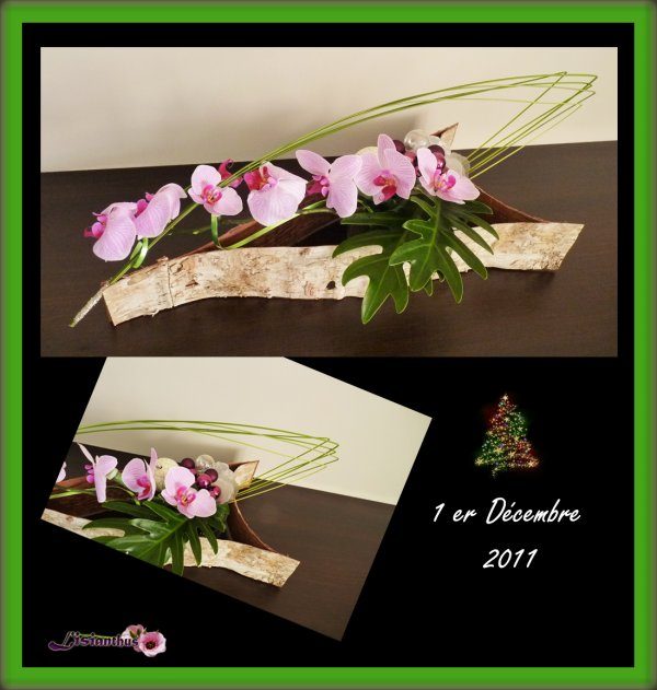 écorce & orchidée