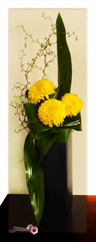 Chrysanthèmes & jeu de feuilles