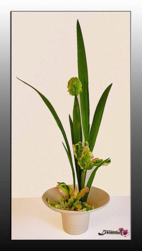 """Tulipes  """"perroquet """""""