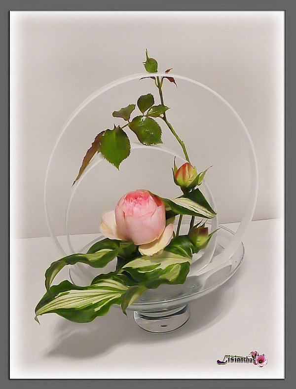 """Rose """" Pierre de Ronsard """""""