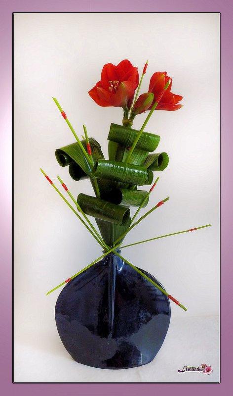 Blog de lisianthus art floral bouquet cr ations for Amaryllis de noel