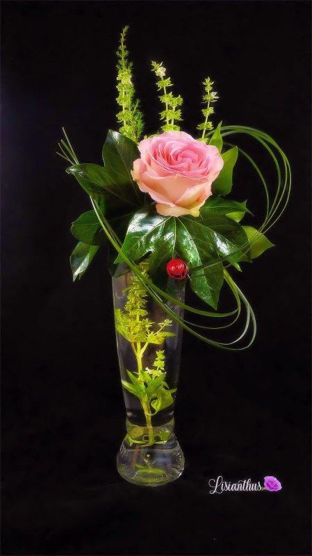 rose & basilic