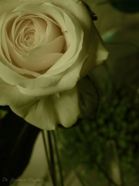 L'absence est à l'amour, ce qu'est au feu le vent ; il éteint le petit, il allume le grand.