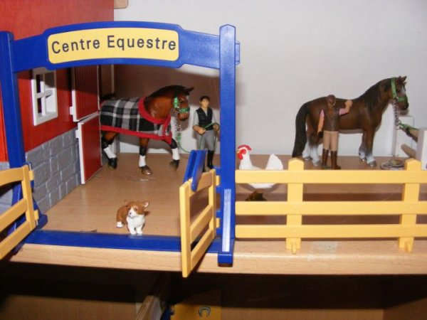 Mes nouvelles chevaux et nouvelle installations