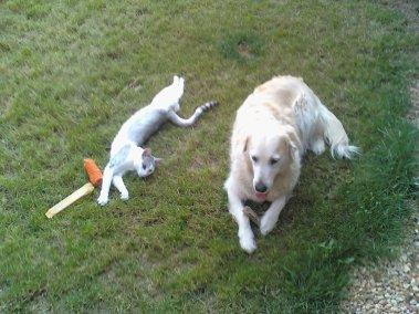 mon chat (sous-couche) et ma chienne (toska)