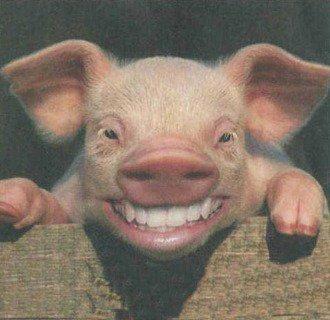 Test du cochon !!!