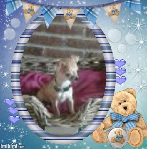 bonjour a vous tous la famille c'est agrandie avec la nouvelle venue une petite chihuahua repondant au non de gipsy bonne jouée a tous bisous