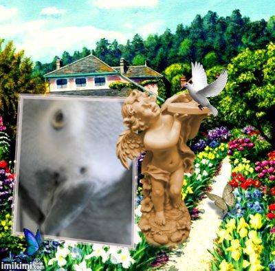 pour mon amie gilli88 son perroquet cocotte et décédé cette aprés midi repose en paix petite cocotte