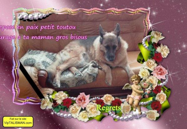 pour mon amie corine et son chien courage bisous
