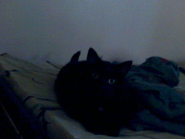 charlie mon chat noir avec du blanc sou le cour sur le ventre aussi