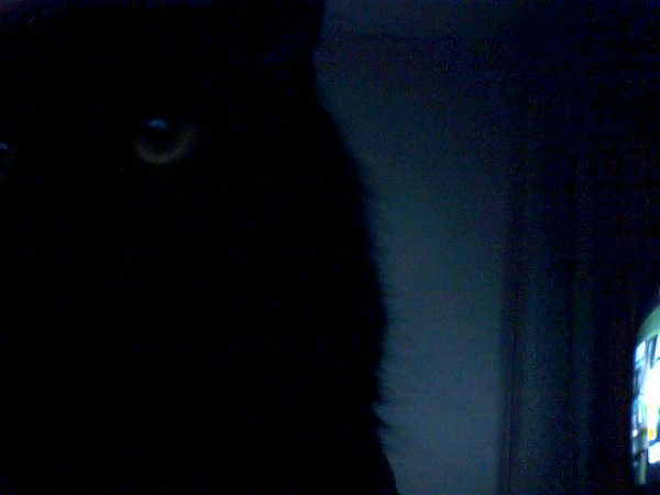 voir si mon chat ticoune li est surper beaux