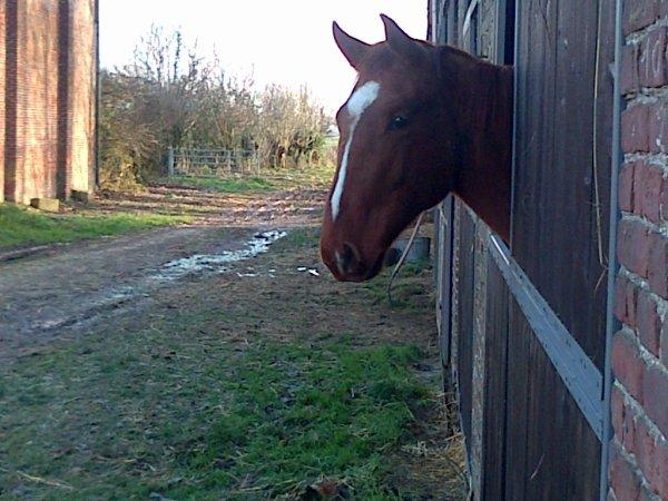 Equitation(l)