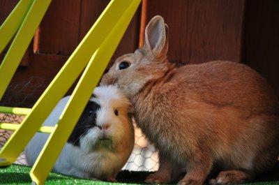 Lilou et Lypsi