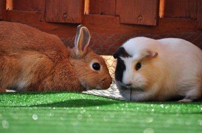 Lypsi et Lilou