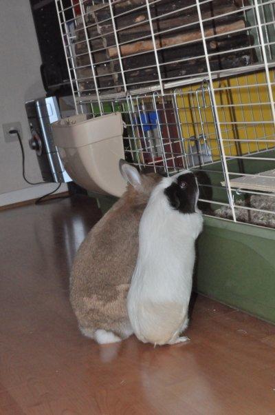Lypsi & Lilou