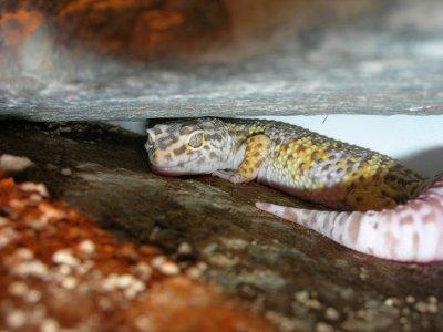 Gecko power