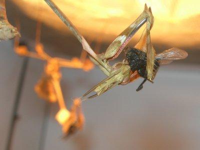 Des insectes... Mais pas de le bouffe !