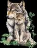 ma passion les loups
