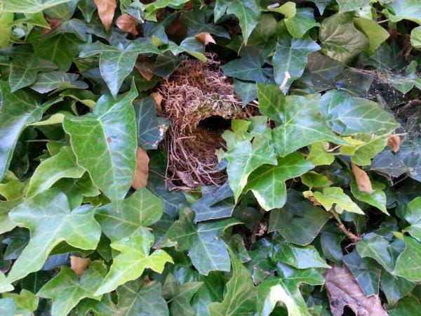 Some birds breeding in my garden