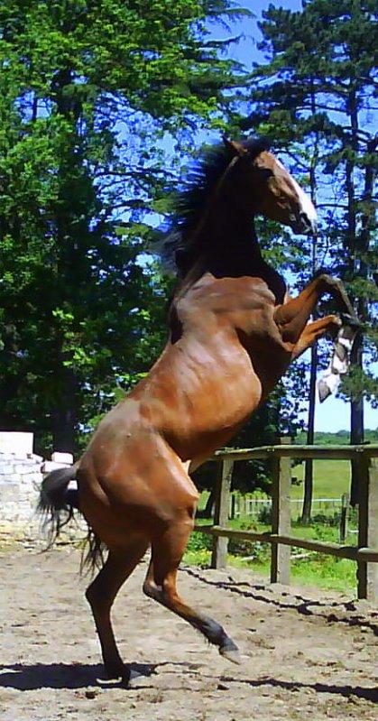 Mon botiful cheval night and day blog de belle et rebelle xx - Cheval de rebelle ...