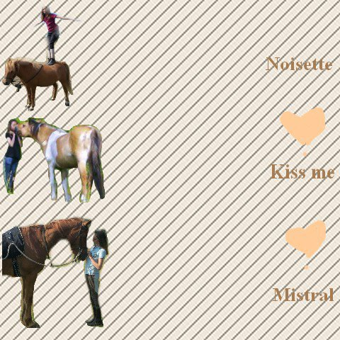 habillage pour meilleurs-chevaux