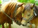 Photo de dream-of-little-pony