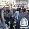 Aidons les a construire un abri ,dans les montagnes, il fait tres froid la nuit ,et ces pauvres chiens sont plus de 350 ,en besoin de tout SVP partagez un maximum une petite cagnotte est lancée svp , le moindre petit don est important que ce soit 1e ou 2 ou 3 ou 5e tout le monde peut participé et tous ensembles ont peut apporter un peu de réconfort à ces animaux du bout du monde ,ne les abandonez pas non plus LOULOUS DE LA COLOMBIE