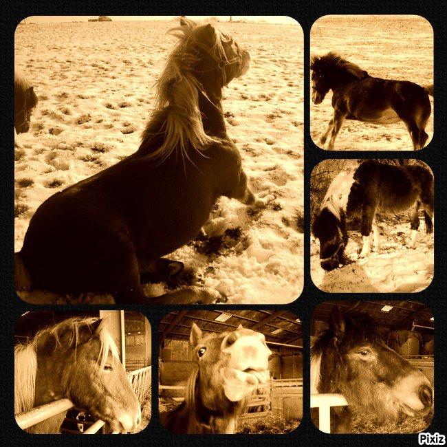 Mes poneys , ma source de bonheur au quotidien $: