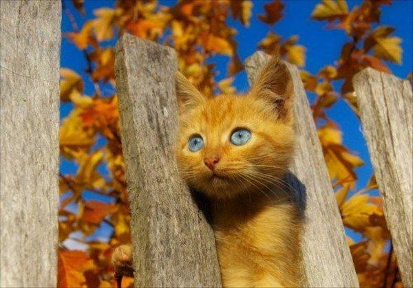 chat et paysage automnale