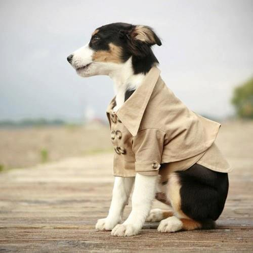 castiel version chien