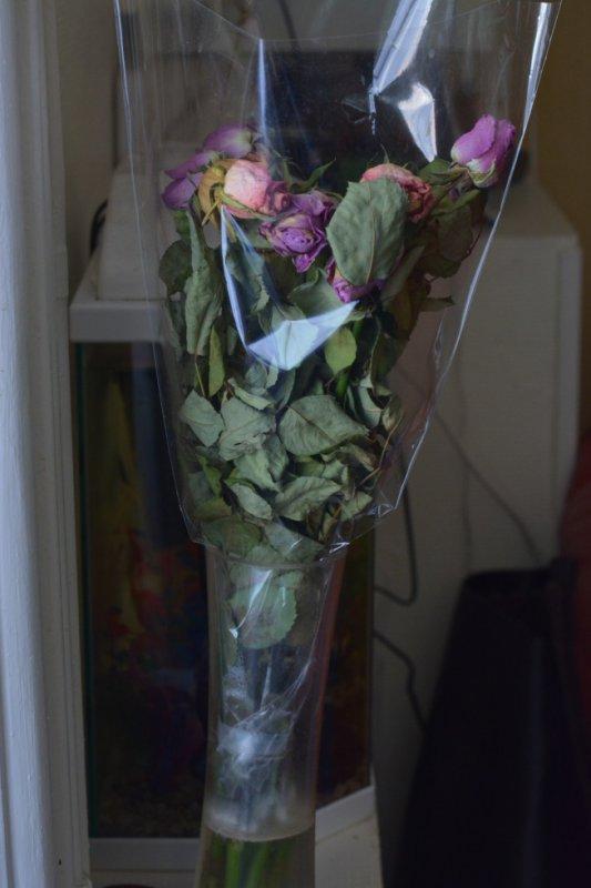 a peine fannées ces jolies roses
