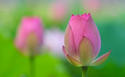 Lotus Flower - This is a symbol of the sun, of creation and rebirth