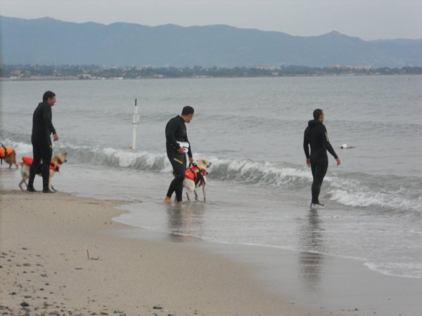 Dog Pride Poetto-Part 2 Dimostrazione unità cinofila salvataggio in acqua