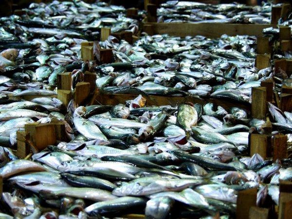 Avec le protocole d'accord de pêche ; les Comores importeront du  poisson demain !