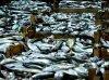 Avec le protocole d'accord de pêche: Les Comores importeront du  poisson demain !