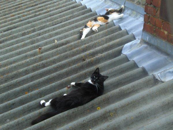 sieste sur la toiture de notre cuisine