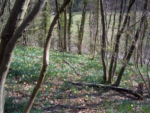 voila quelques photos du bois pres de chez nous