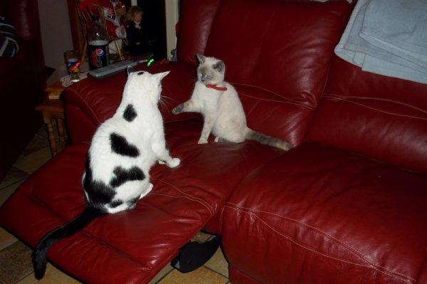 Calinette et Skippy